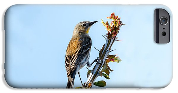 Haybale iPhone Cases -  Migrating Warbler iPhone Case by Robert Bales