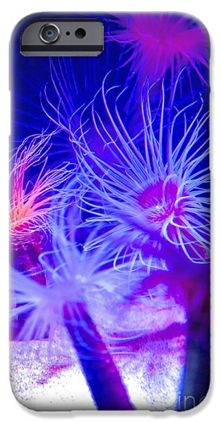 Pch iPhone Cases -  Monterey Bay Aquarium 2  iPhone Case by Micah May