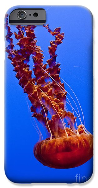 Pch iPhone Cases -  Monterey Bay Aquarium 4 iPhone Case by Micah May