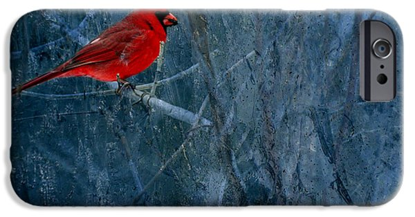 Young Photographs iPhone Cases -  Northern Cardinal iPhone Case by Thomas Young