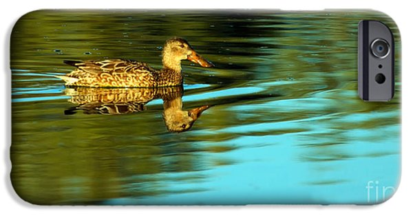 Haybale iPhone Cases -  Northern Shoveler Duck iPhone Case by Robert Bales