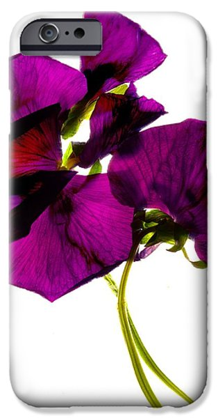 Pansy iPhone Cases -  Pansies III iPhone Case by Julia McLemore
