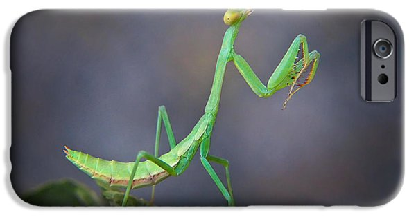 Mantises iPhone Cases -  Preying Mantis iPhone Case by David and Carol Kelly