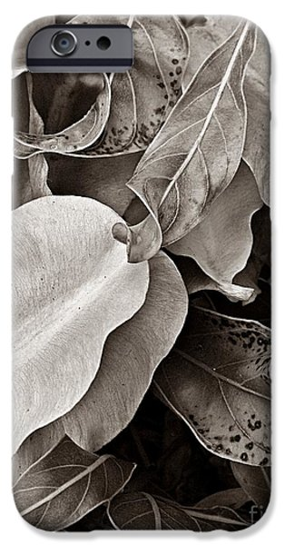 Abstract Forms Photographs iPhone Cases -   Primrose Seed Pods iPhone Case by Chris Berry