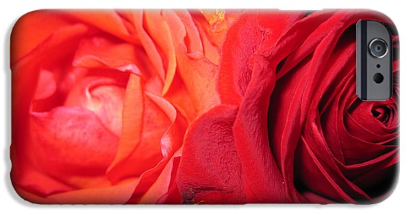 Flora Drawings iPhone Cases -  Rose Duet 1 iPhone Case by Tara  Shalton