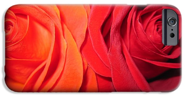 Flora Drawings iPhone Cases -  Rose Duet 2 iPhone Case by Tara  Shalton