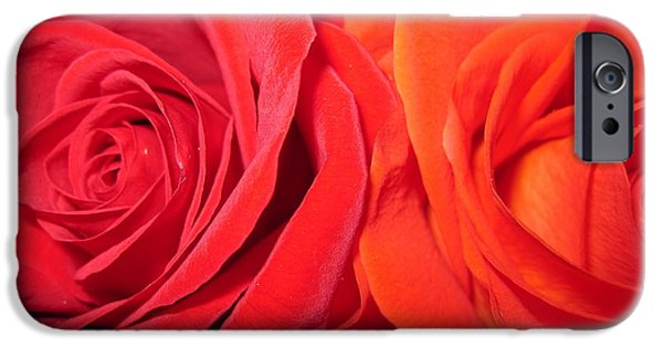 Flora Drawings iPhone Cases -  Rose Duet 3 iPhone Case by Tara  Shalton