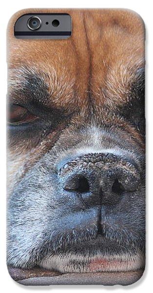 Sad Boxer iPhone Case by John Greco