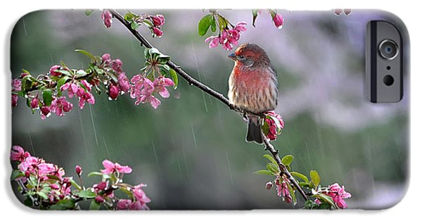 Arkansas iPhone Cases -  Singing in the Rain  2   iPhone Case by Nava  Thompson