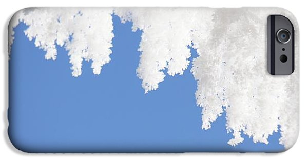 Snow iPhone Cases -  Hanging Frost iPhone Case by Sheela Ajith