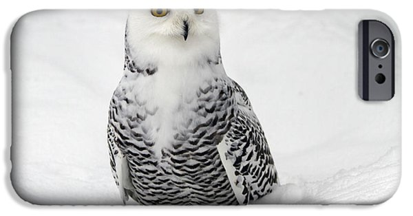 Snowy iPhone Cases -  Snowy Owl Bubo scandiacus iPhone Case by Lilach Weiss