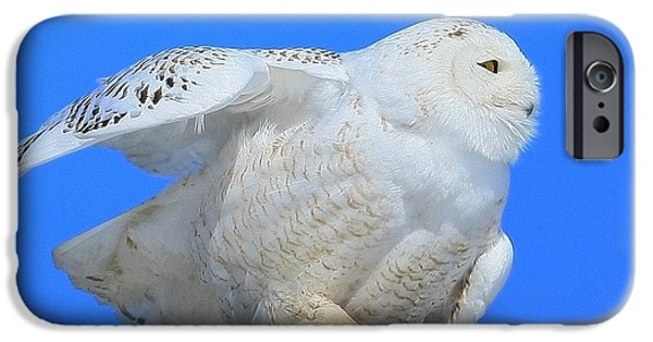 Maine iPhone Cases -  Snowy Owl iPhone Case by Donald Cramer