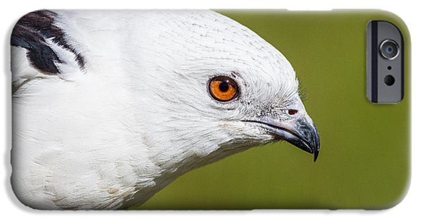 West Fork iPhone Cases -  Swallow-tailed Kite iPhone Case by Jeff Donald