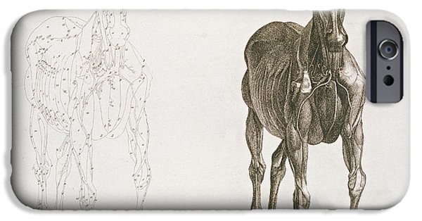 Anatomical iPhone Cases -  Tab VIII from The Anatomy of the Horse iPhone Case by George Stubbs