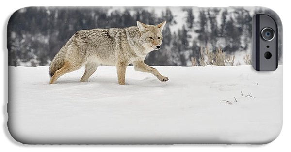 Coyote Art iPhone Cases -  Winters Determination iPhone Case by Sandra Bronstein
