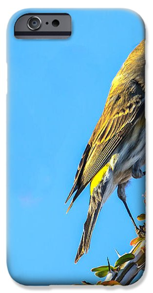 Yellow-rumped Warbler iPhone Case by Robert Bales