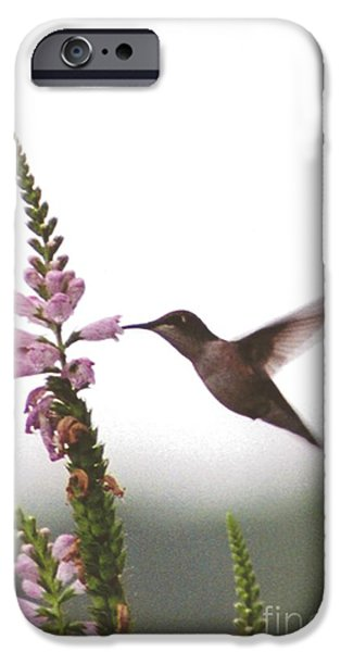 Nature Study iPhone Cases - #031 Hummingbird Sipping Nectar from Obedient Puple Flower iPhone Case by Robin Lee Mccarthy Photography