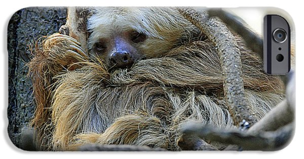 Sloth iPhone Cases - 0541 Sloth iPhone Case by Steve Sturgill
