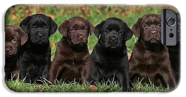 Black Dog iPhone Cases - 8 Labrador Retriever puppies brown and black side by side iPhone Case by Dog Photos
