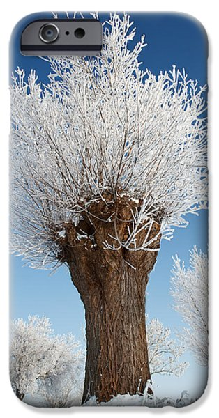 Willow Lake iPhone Cases - A frosted willow on a very cold and bright winter day iPhone Case by Roeselien Raimond