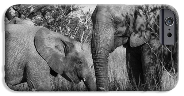 Elephant iPhone Cases - A Gentle Nudge iPhone Case by Mountain Dreams