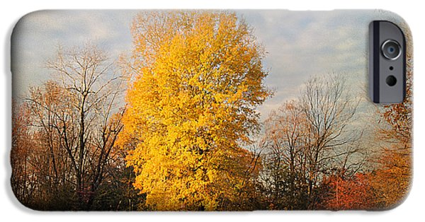 Autumn Scene Photographs iPhone Cases - A Golden Moment iPhone Case by Jai Johnson