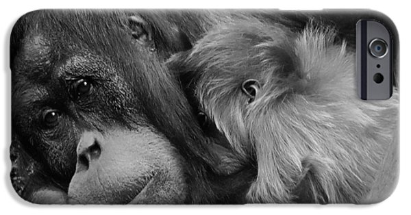 Orangutan iPhone Cases - A Mothers Love iPhone Case by Mountain Dreams