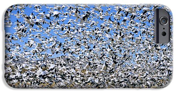 Birds iPhone Cases - A Panoramic Of Thousands Of Migrating iPhone Case by Panoramic Images