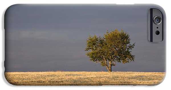 Agricultural iPhone Cases - A Single Tree In A Golden Field iPhone Case by Michael Interisano