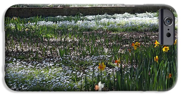 Wall Greeting Cards Digital iPhone Cases - A Very Special Garden V iPhone Case by Suzanne Gaff