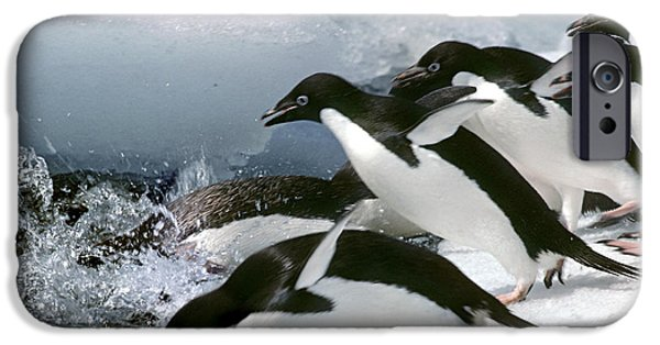 Recently Sold -  - Fauna iPhone Cases - Adelie Penguins iPhone Case by Art Wolfe
