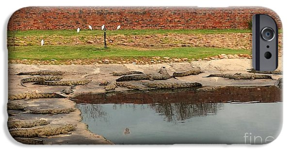 Stellenbosch iPhone Cases - African Nile Crocodiles iPhone Case by Lisa Byrne