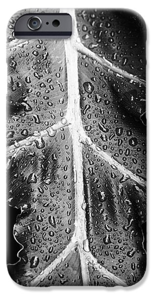 Philodendron iPhone Cases - After the Rain iPhone Case by Scott Pellegrin