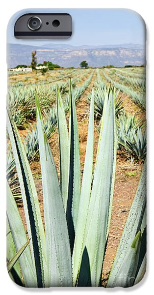 Agave cactus field in Mexico iPhone Case by Elena Elisseeva