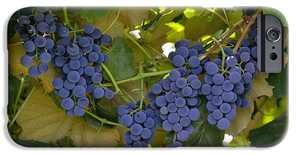 Concord Photographs iPhone Cases - Agriculture - Concord Tablejuice Grapes iPhone Case by Gary Holscher