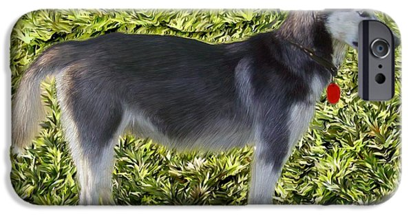 Huskies iPhone Cases - Alaskan Husky iPhone Case by Bruce Nutting