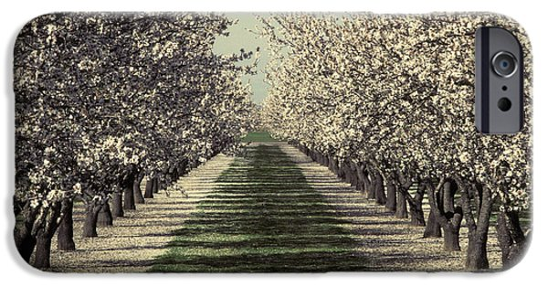 Rosaceae iPhone Cases - Almond Orchard In Bloom iPhone Case by Ron Sanford
