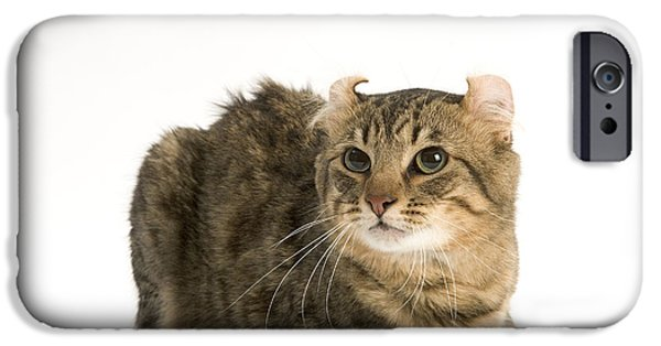 American Shorthair iPhone Cases - American Curl Cat iPhone Case by Jean-Michel Labat