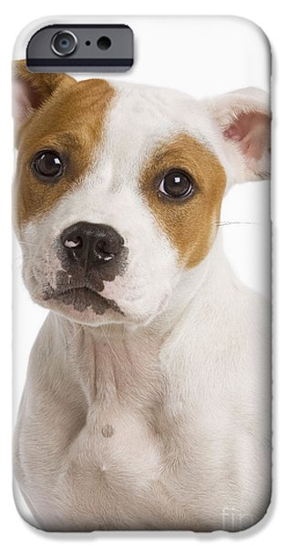 Dog Close-up iPhone Cases - American Staffordshire Terrier iPhone Case by Jean-Michel Labat