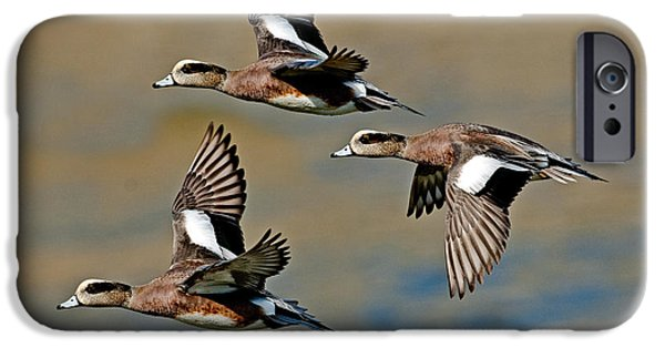 Fauna iPhone Cases - American Wigeon Drakes iPhone Case by Anthony Mercieca