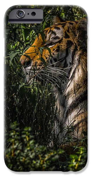 The Tiger iPhone Cases - Amur Tiger iPhone Case by Ernie Echols