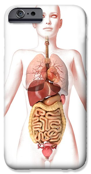 Sigmoid Colon iPhone Cases - Anatomy Of Female Body With Internal iPhone Case by Leonello Calvetti