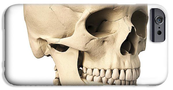 Frontal Bones iPhone Cases - Anatomy Of Human Skull, Side View iPhone Case by Leonello Calvetti