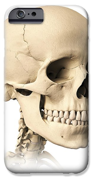 Anatomy Of Human Skull, Side View iPhone Case by Leonello Calvetti