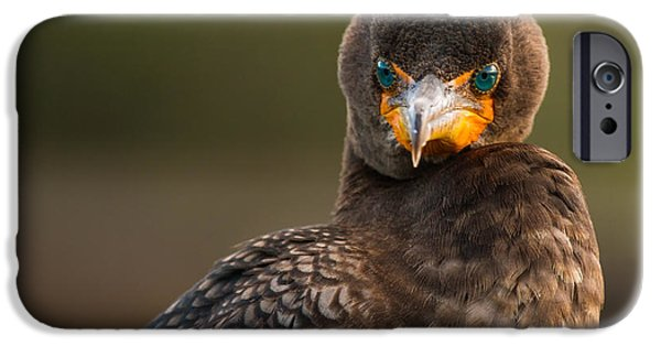 Birds iPhone Cases - Another Cormorant Face Off iPhone Case by Andres Leon