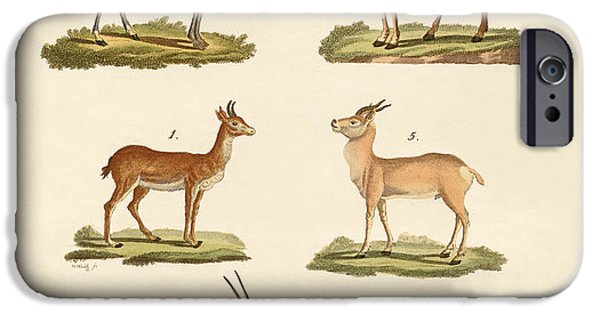 Animal Drawings iPhone Cases - Antelopes and gazelles iPhone Case by Splendid Art Prints