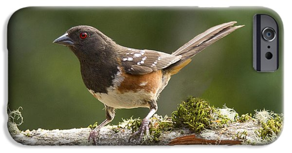 Sparrow iPhone Cases - Anticipation iPhone Case by Jean Noren