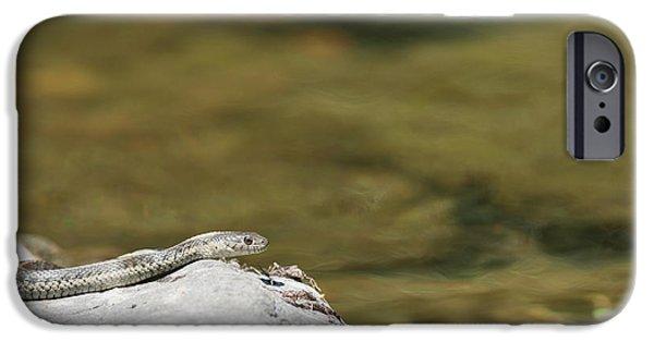 Serpent iPhone Cases - Aquatic garter snake iPhone Case by Dan Suzio