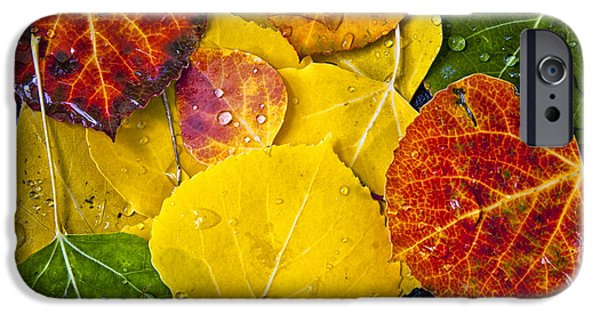Autumn Leaf On Water iPhone Cases - Aspen Rainbow iPhone Case by Teri Virbickis