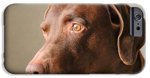 Weimaraners iPhone Cases - Attila iPhone Case by Heike Hultsch